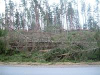Dagen efter stormen